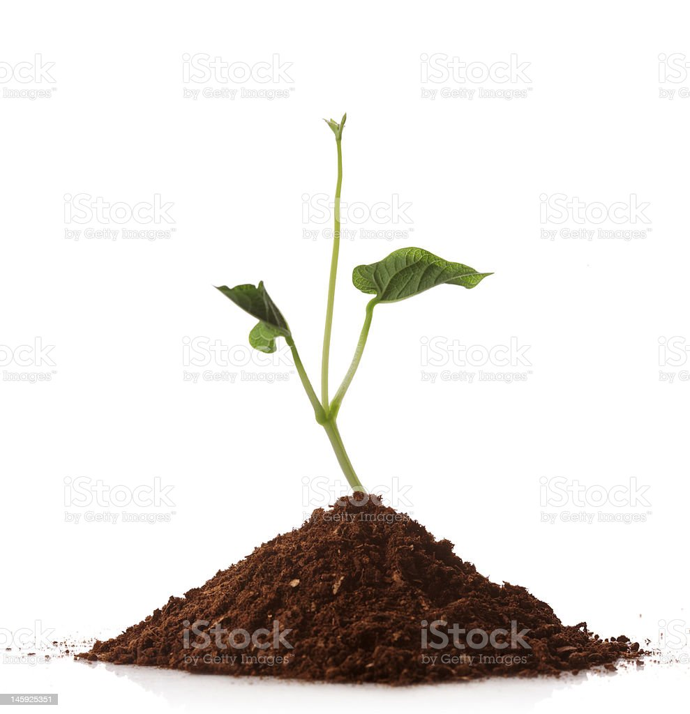 Green plant growing from a pile of soil royalty-free stock photo