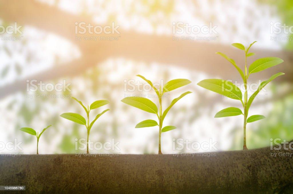 Grüne Pflanze wächst Wachstum im Sonnenschein Beleuchtung und Naturholz Bokeh Hintergrund. Ökologie Geschäftskonzept Erhöhung finanzielle Fortschritte. Tag der Erde – Foto
