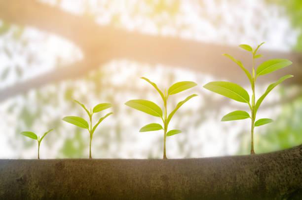 녹색 식물은 햇빛 조명과 자연 트리 bokeh 배경 성장 성장. 생태 사업 증가 금융 진행 개념. 지구의 날 - 대형 뉴스 사진 이미지