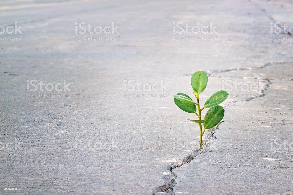 Grüne Pflanze wächst auf Riss-Straße, leeren text – Foto