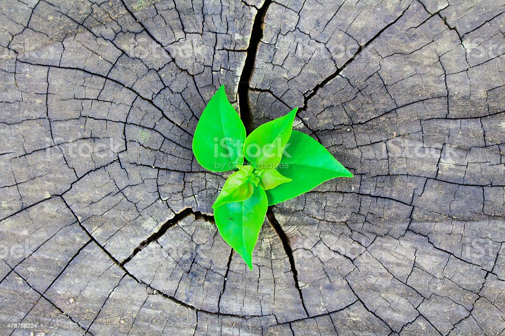 Green plant growing on dead tree trunk stock photo