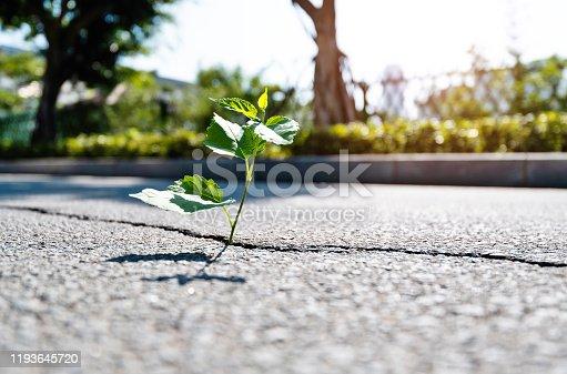 Green plant growing through concrete floor.