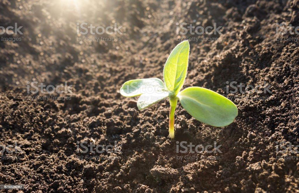 Green plant growth background photo libre de droits