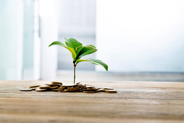 Green plant growth from coins on table stock photo