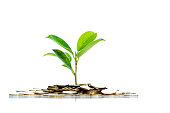 istock Green plant growth through a stack of coins 623514294