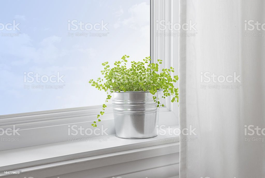 Green plant in a modern home royalty-free stock photo