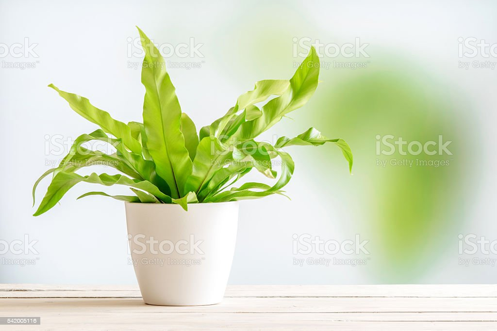 Green plant in a white flowerpot stock photo