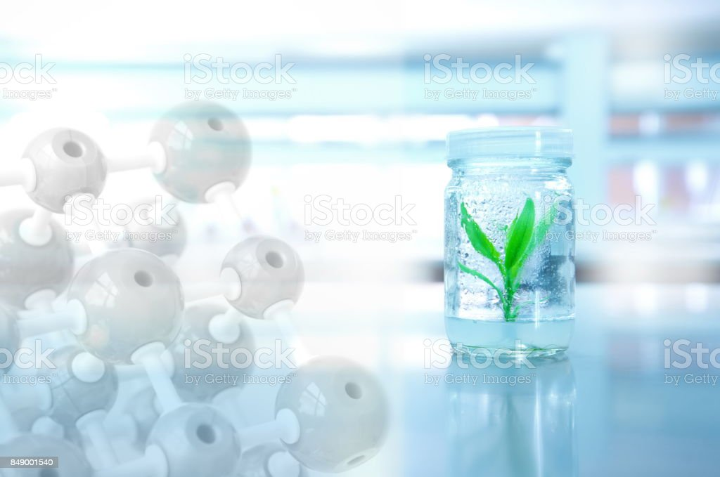 green plant in bottle glass with chemical molecule in science laboratory background stock photo