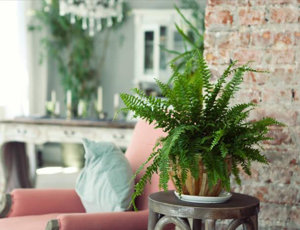 groene plant in eigentijds interieur - kamerplant stockfoto's en -beelden