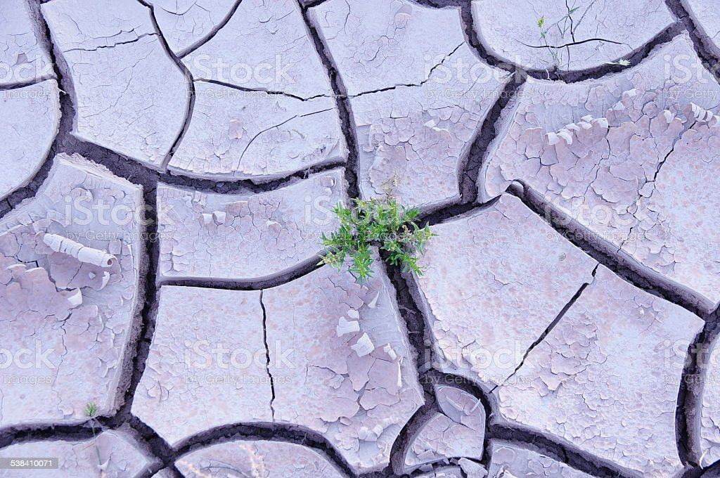 Green plant in dry mud in the desert stock photo