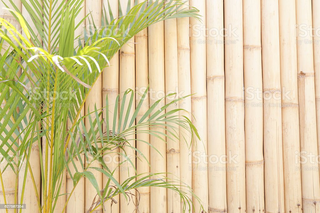 Green plant in front of bamboo wall stock photo