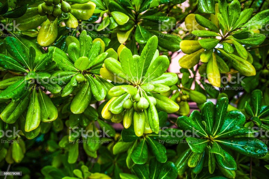 Green plant in garden in Italy stock photo