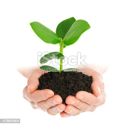 Green plant in hand new life isolated