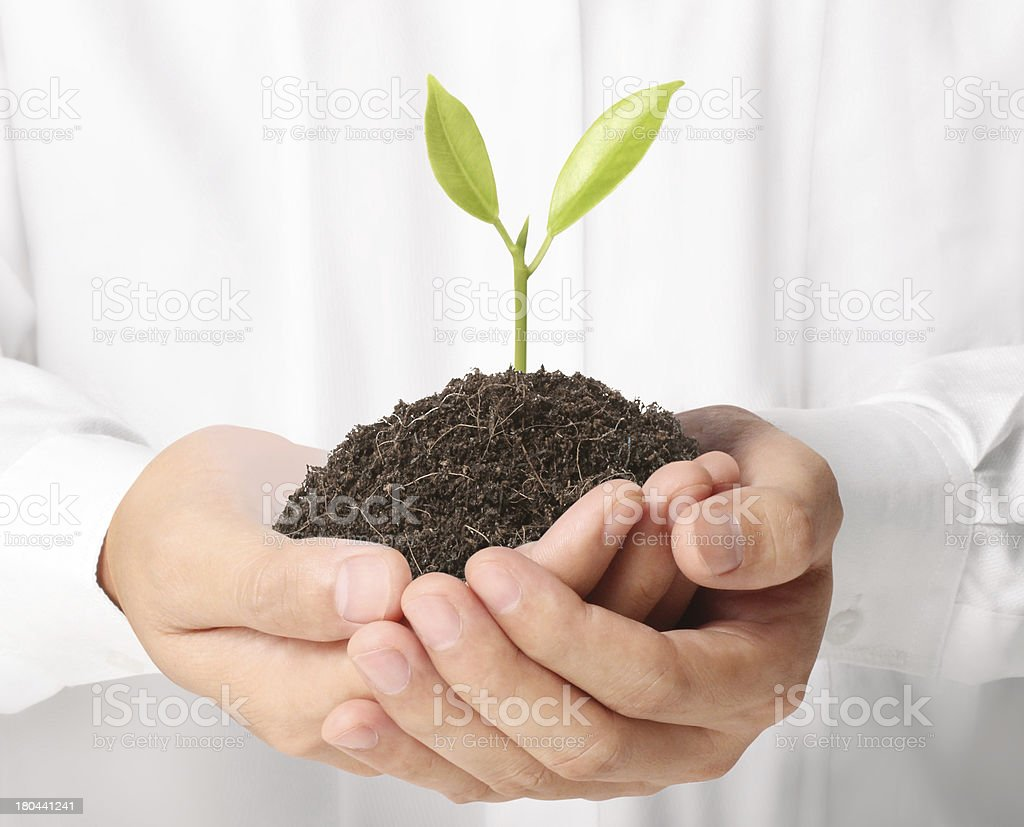green plant in hand royalty-free stock photo
