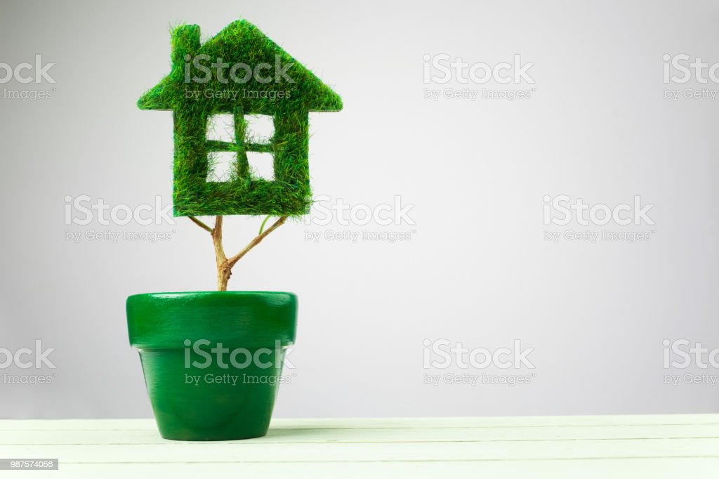 Green plant in pot shaped like house stock photo