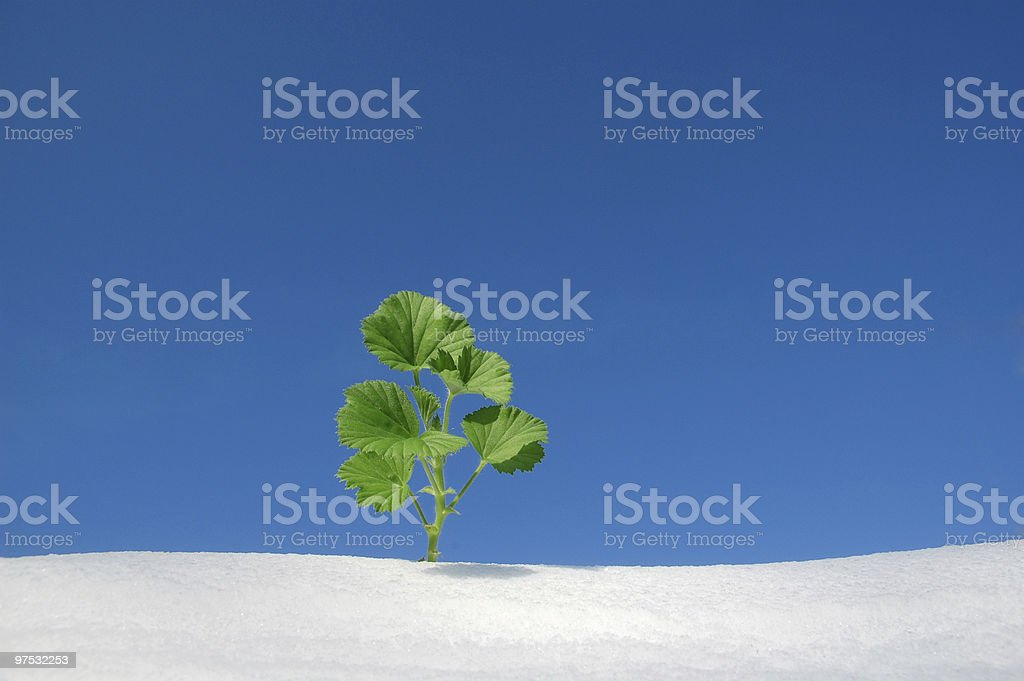 green plant in snow royalty-free stock photo