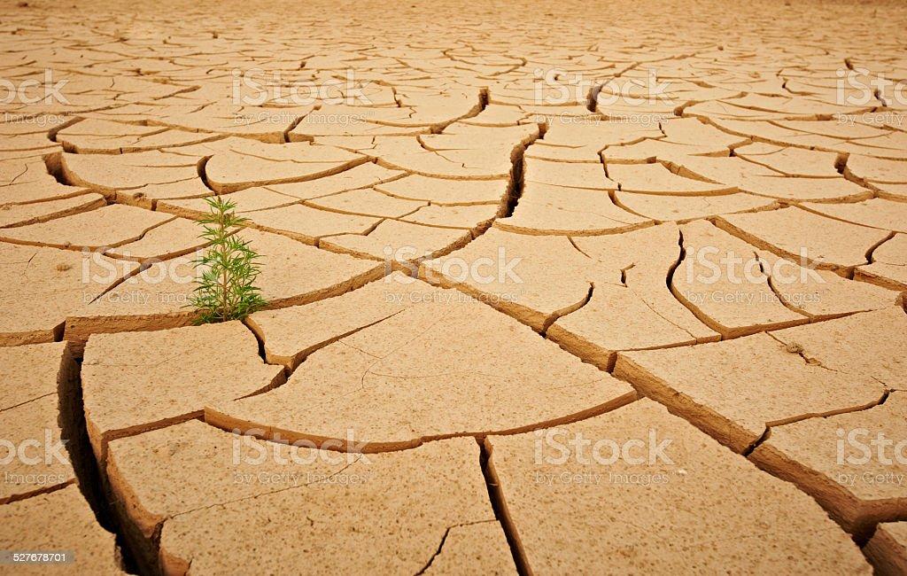 green plant in the desert stock photo