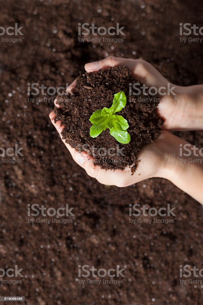 Green plant is growing up stock photo
