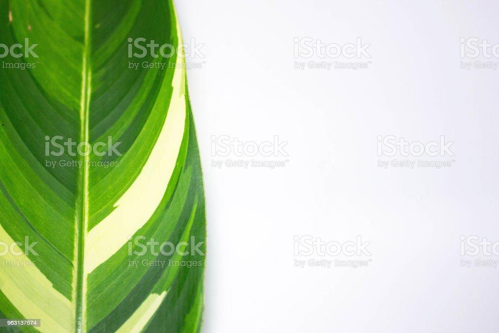 Grön växt blad bakgrund, bladen på en vit bakgrund - Royaltyfri Abstrakt Bildbanksbilder
