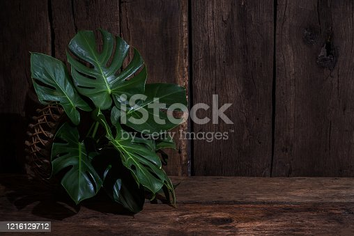 641254964 istock photo green plant leaves textured in the nature, green background 1216129712