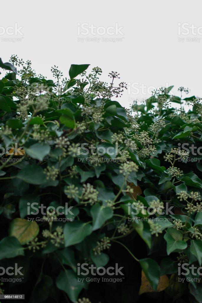 白色背景上的綠色植物 - 免版稅垂直構圖圖庫照片