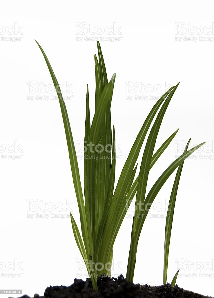 green plant on a white background royalty-free stock photo
