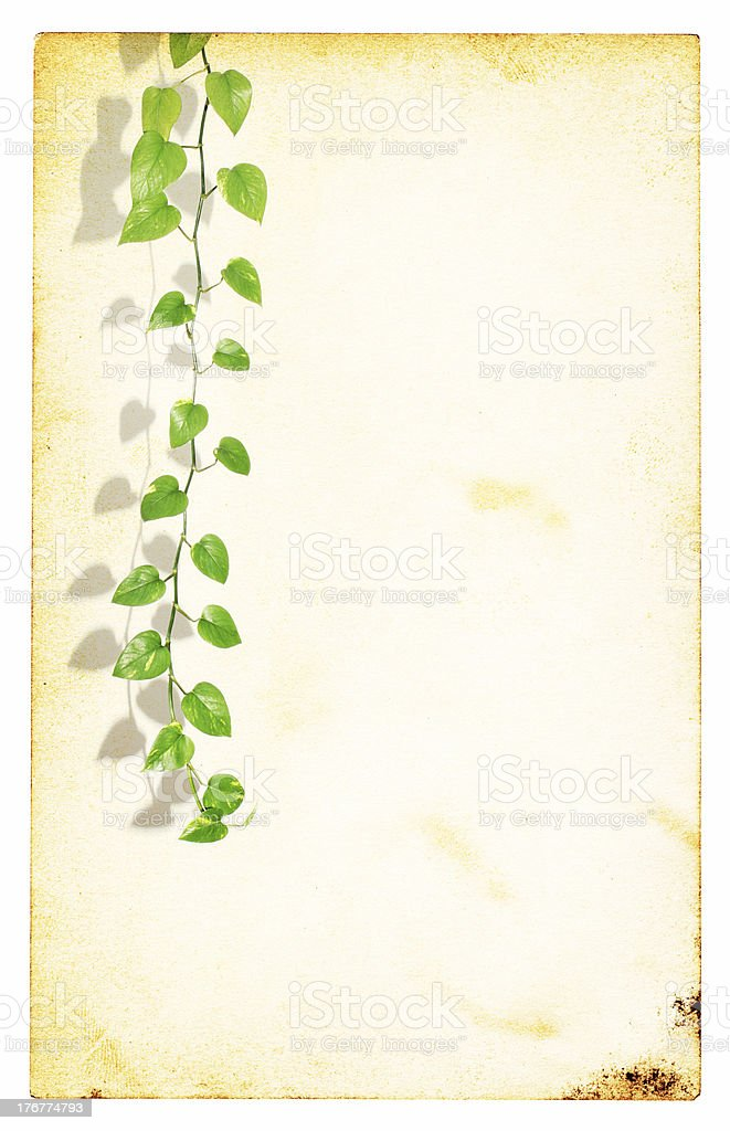 Green Plant on an Old Piece of Paper royalty-free stock photo
