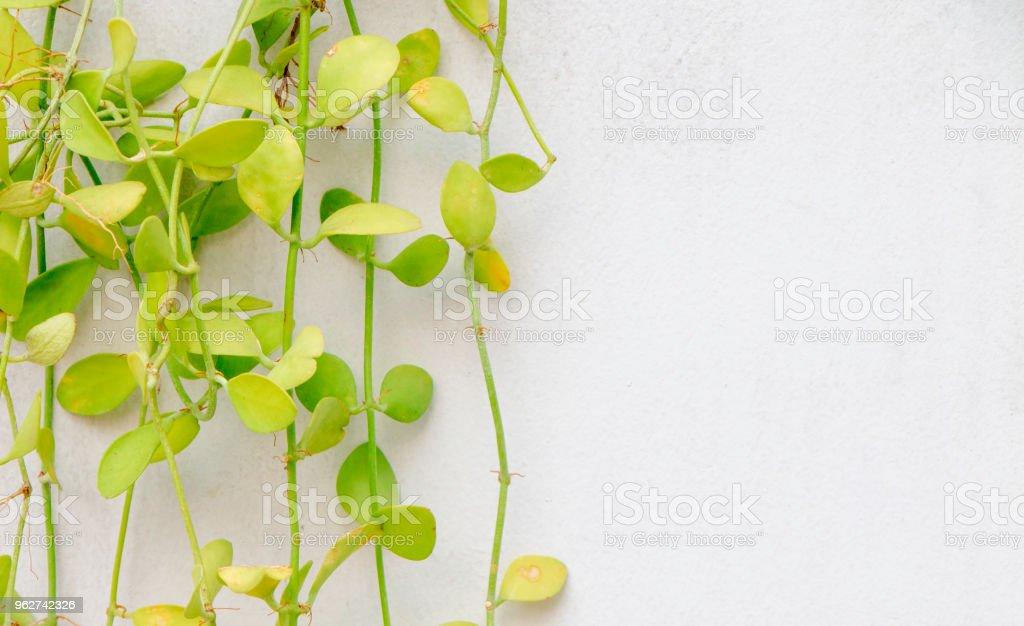 planta verde sobre fundo de parede de concreto. - Foto de stock de Abstrato royalty-free