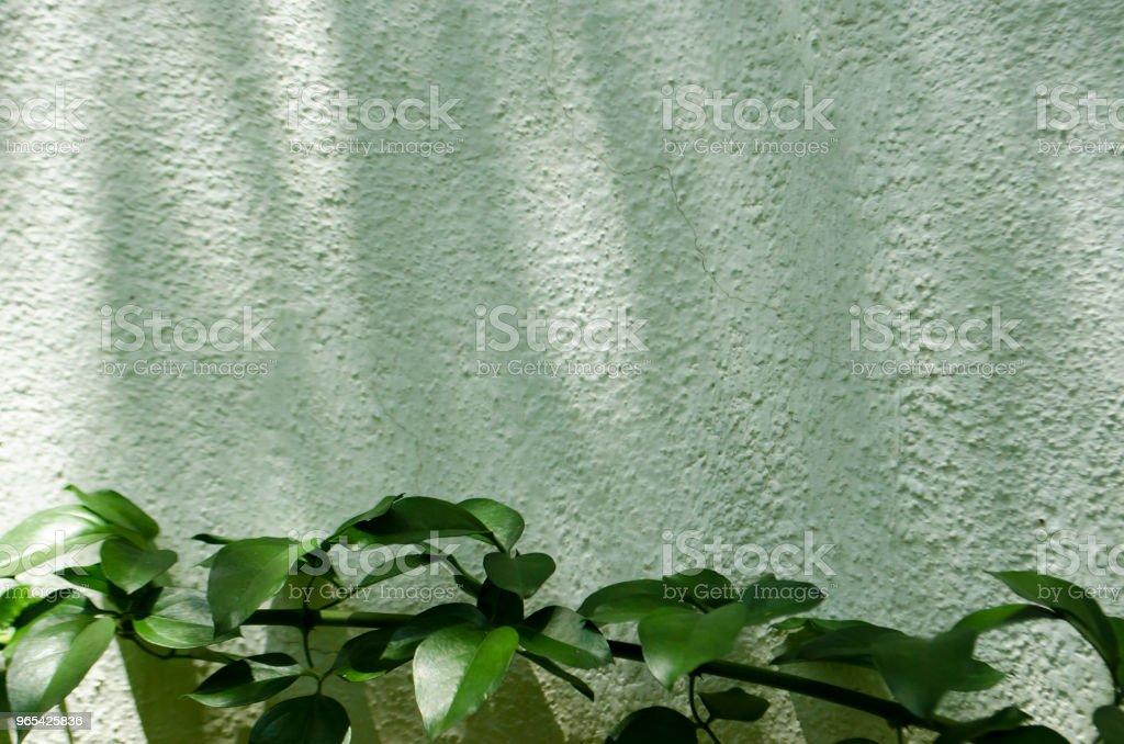 Vert plante sur fond de mur en béton - Photo de Arbre libre de droits