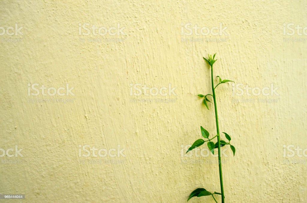 Green plant on concrete wall background zbiór zdjęć royalty-free