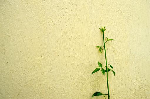 混凝土牆體背景下的綠色植物 照片檔及更多 仿舊 照片