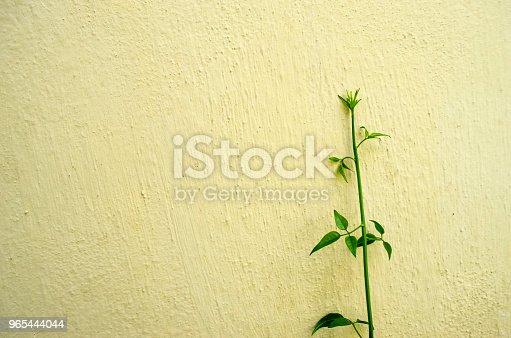 Green Plant On Concrete Wall Background - Stockowe zdjęcia i więcej obrazów Abstrakcja