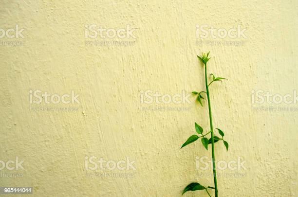 Zielona Roślina Na Betonowym Tle Ściany - zdjęcia stockowe i więcej obrazów Abstrakcja