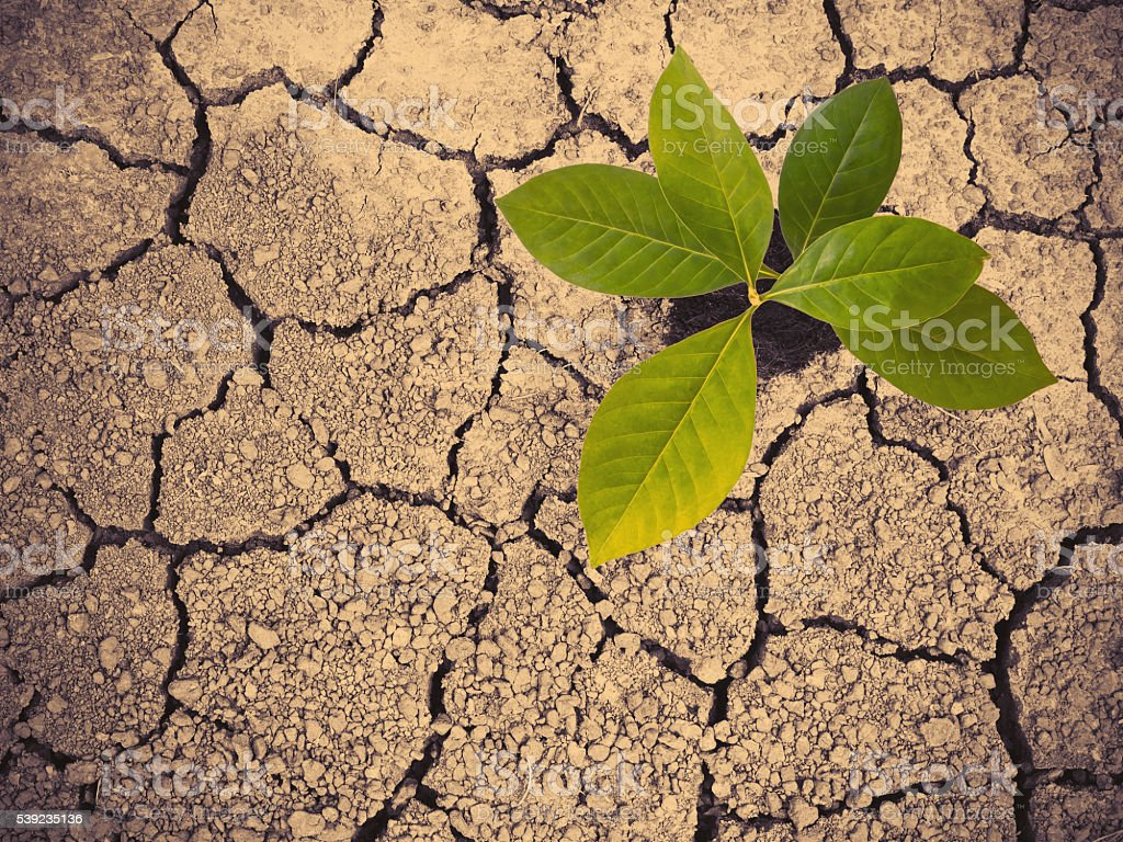 Green plant on dry earth with cracked textured royalty-free stock photo