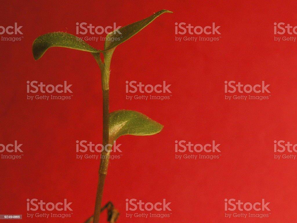 Grüne Pflanze auf rotem Hintergrund Lizenzfreies stock-foto