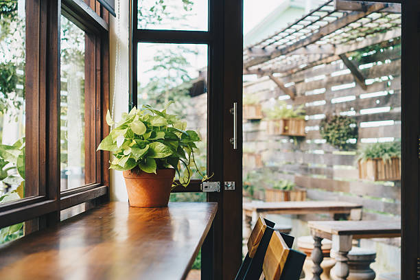 Green plant on table,Coffee shop concept,Daylight from window. stock photo