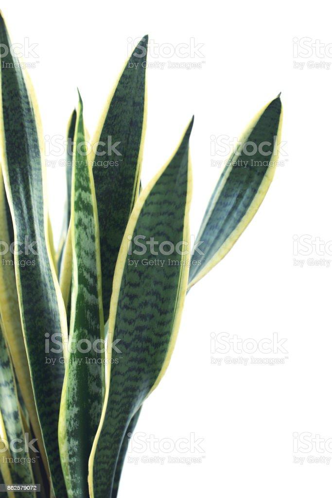 green plant on white stock photo