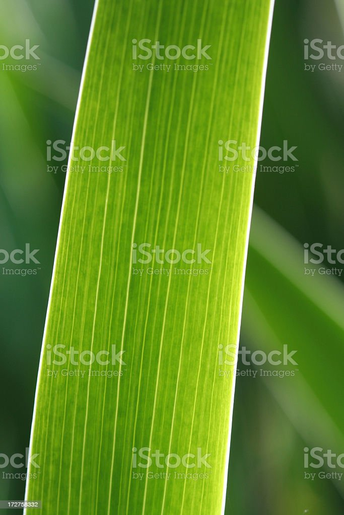 Green Plant royalty-free stock photo