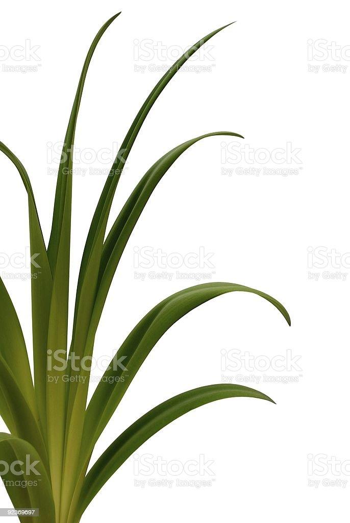 Grüne Plant Lizenzfreies stock-foto