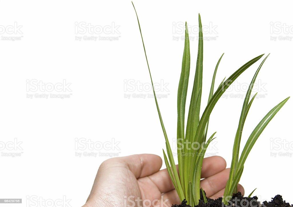 Pianta verde foto stock royalty-free