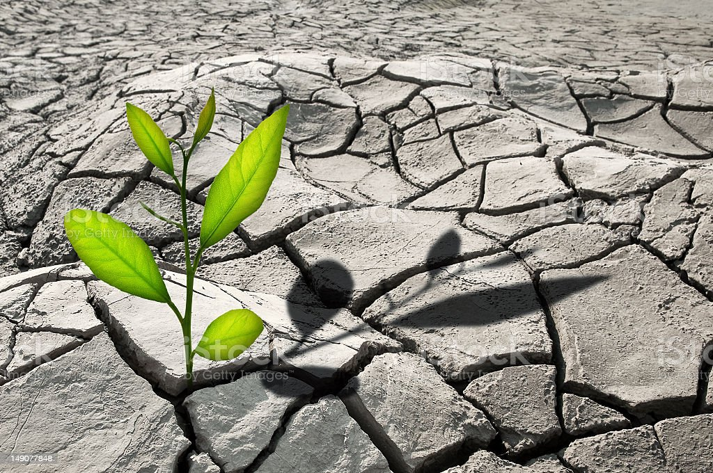 Green plant poking through cracked, rocky terrain  stock photo