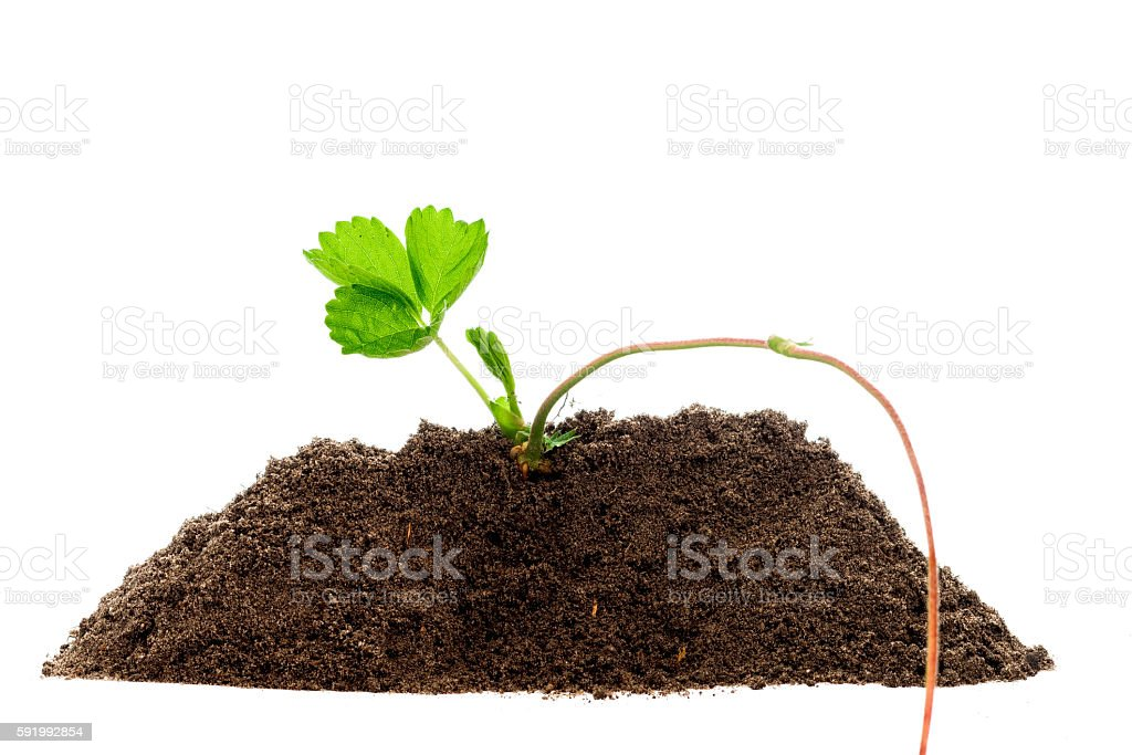 Green plant profile isolated stock photo