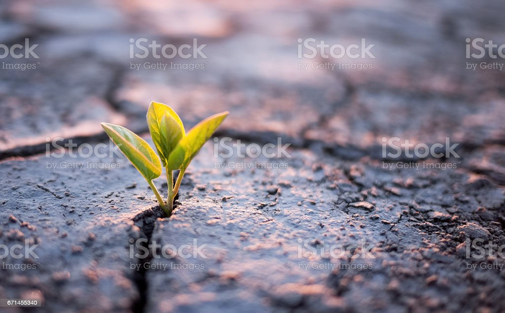 Green plant sprout in desert stock photo