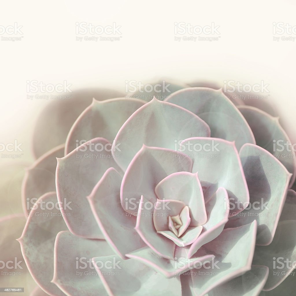 Green plant stone rose stock photo