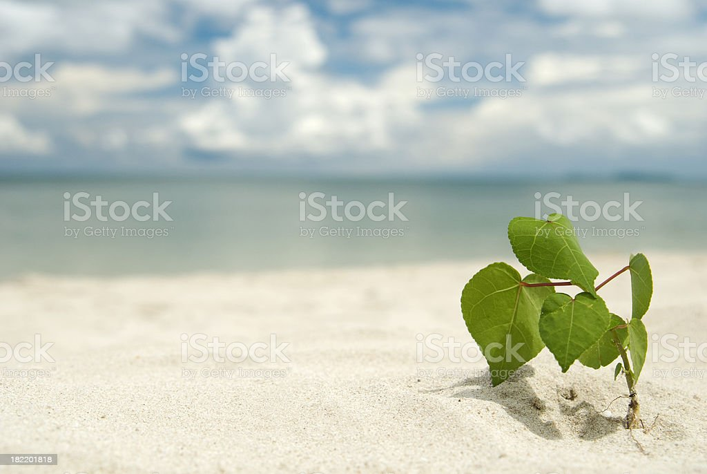 Green plant survival on the beach stock photo