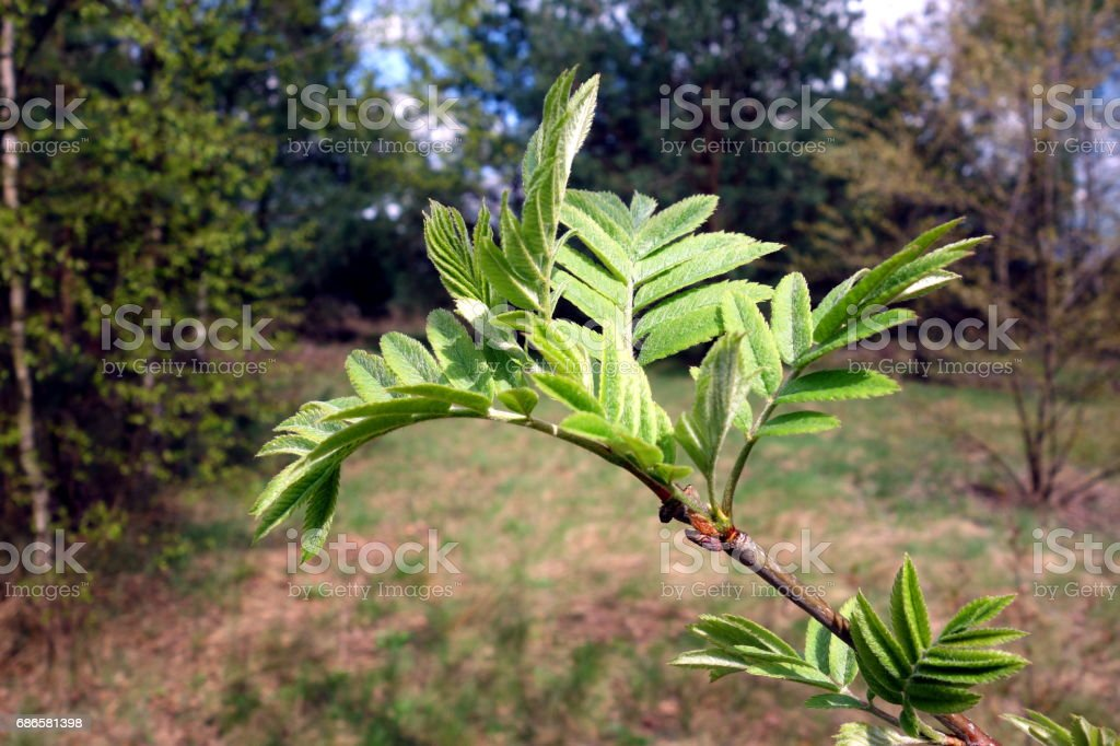 Green plant twig, springtime royalty-free stock photo
