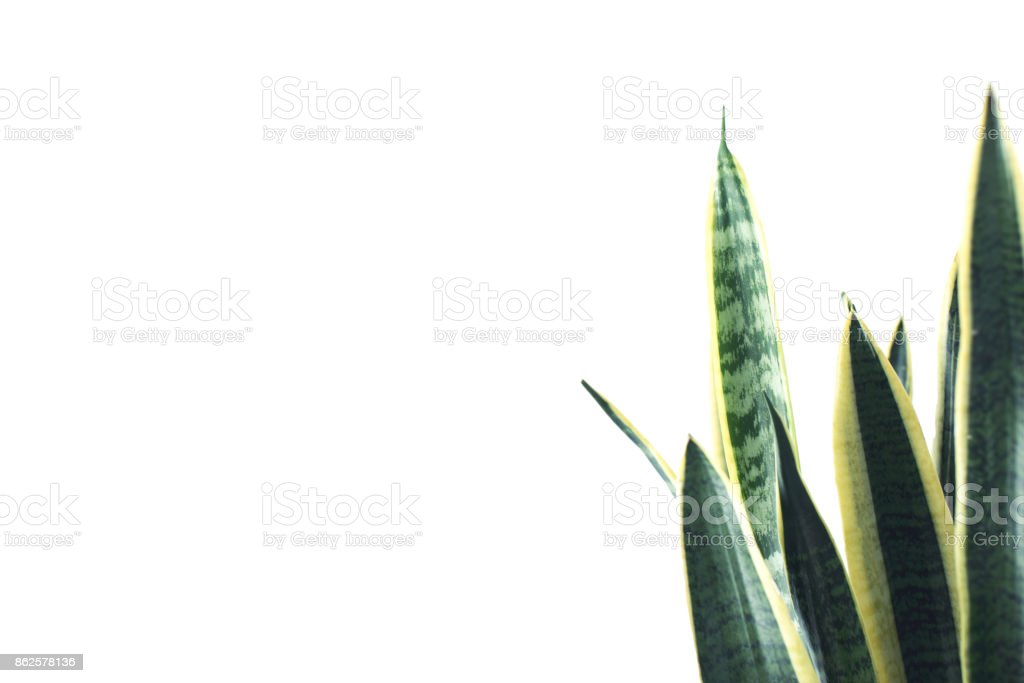 green plant with copy space stock photo