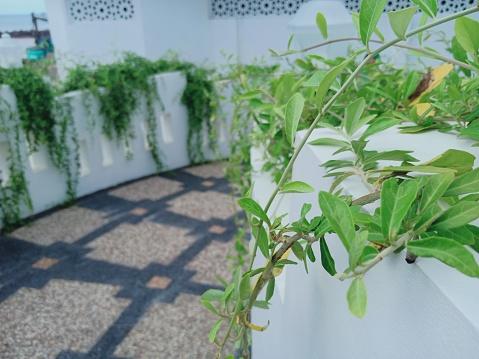 Green planta