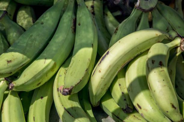 시장에서 녹색 plantains - 플렌틴 바나나 뉴스 사진 이미지