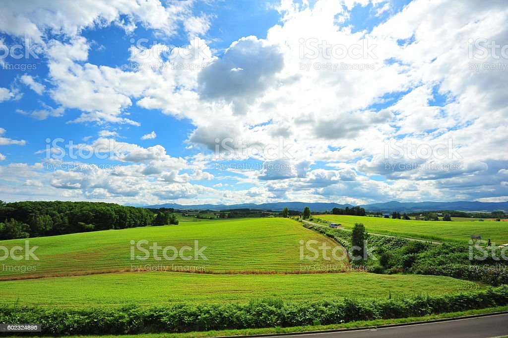 Green Plantation Fields in Biei, Hokkaido, Japan stock photo